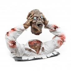 Cut Off Zombie Head Display